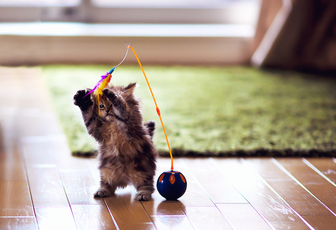 how to play with your cat without toys