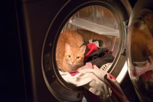 7 Safety Tips You Must Practice At Home When You Have A Cat
