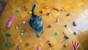 Responsible Pet Owners Month: How To Keep Your Cat Fit And Healthy