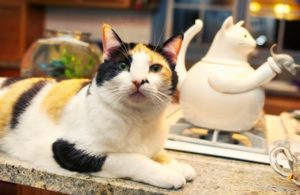 What's Your Take On Letting Your Cat On The Kitchen Countertops?