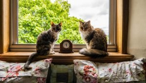 Why The Start Of Daylight Saving Time Drives Some Cats Bonkers