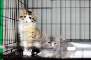 4 Key Questions To Ask Before Adopting A Cat From A Shelter