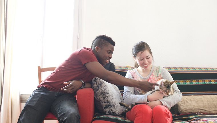 Couple are playing with their pet cat.