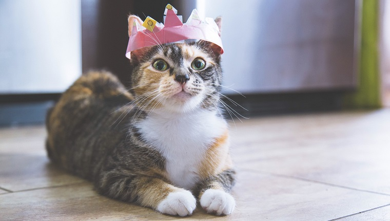 Close-Up Portrait Of Cat Wearing Crown On Floor At Home