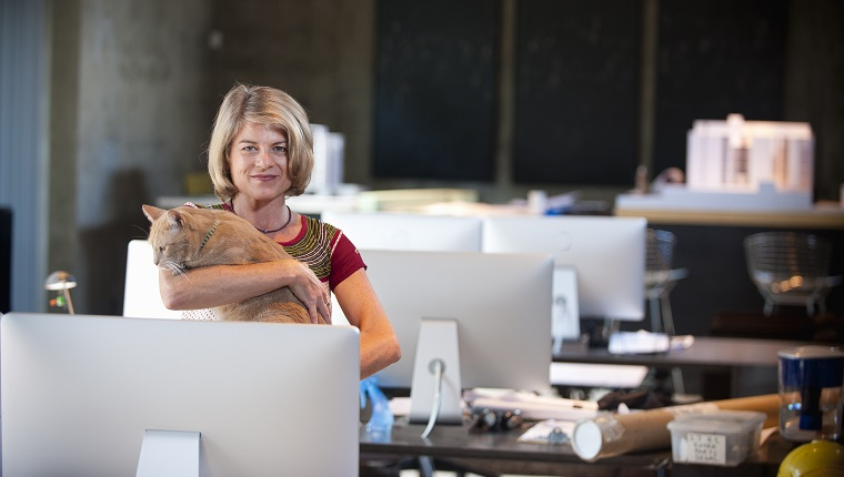 businesswoman with cat in architectural office