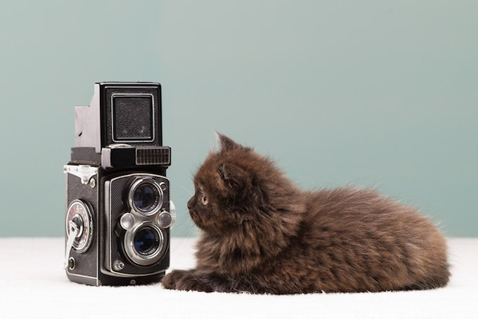 6 Tips For Taking Great Pics Of Your Cat On National