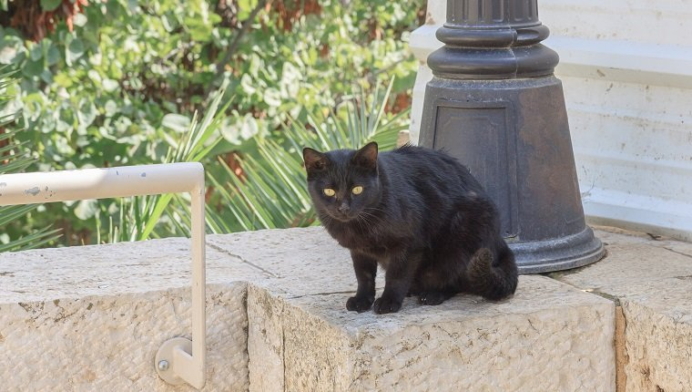 Black homeless cat who is sitting in Jerusalem