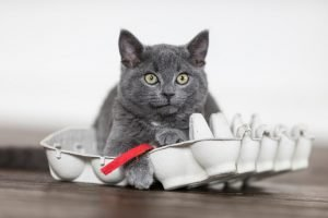 4 Cost Saving Tips For New Cat Owners