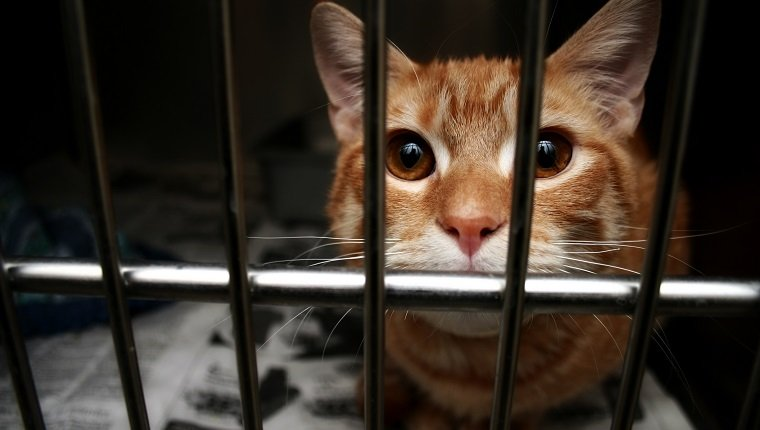 orange cat in the dog pound during adopt a less adoptable pet week