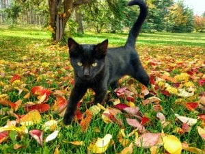 Black Cat Appreciation Day: August 17th [PICTURE GALLERY]
