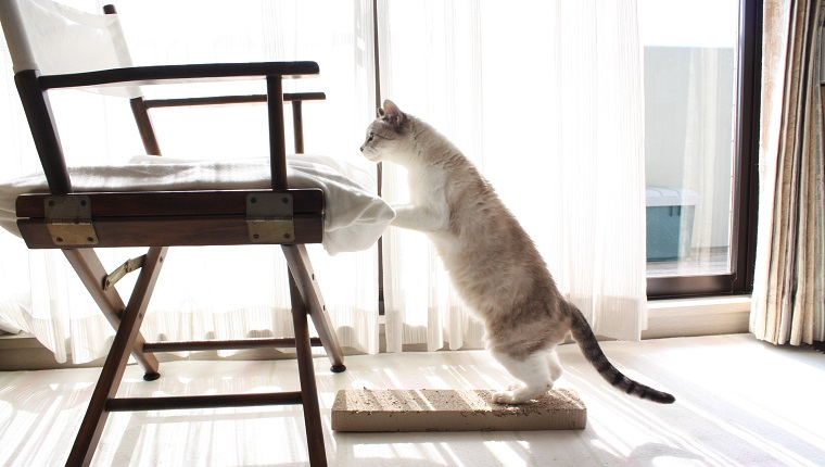 Cat jumping on chair.