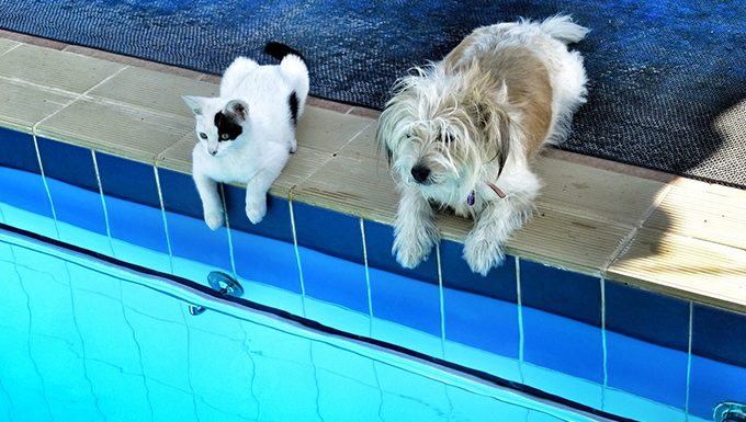 dog and cat sitting by the pool