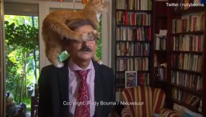 Hilarious Cat Climbs On Academic Owner During Serious News Interview [VIDEO]