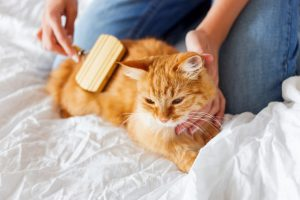 4 Ways To Get Into Back To School Mode With Your Cat