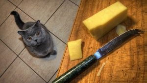 Can Cats Eat Cheese? Is Cheese Safe For Cats?