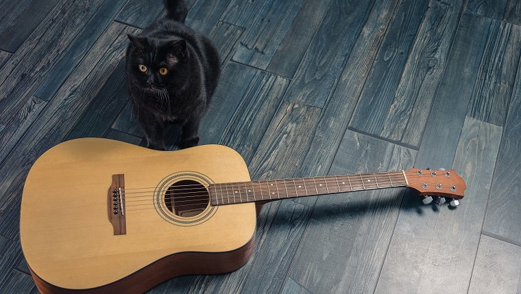 Black cat sitting near a guitar