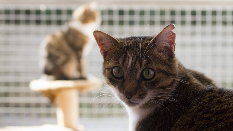 France, cats in a refuge for animals (SPA).