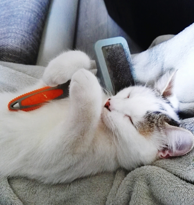 How To Minimize Cat Hair