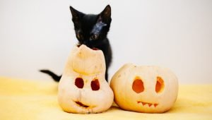 Why You Should Start Feeding Your Cat Pumpkin For Fall