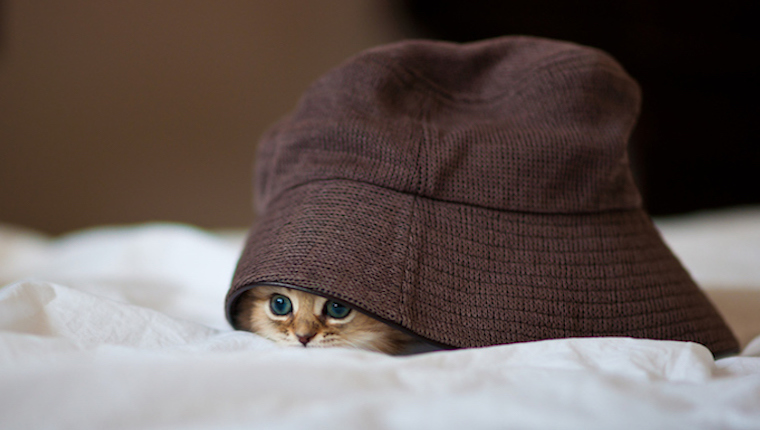 Persian kitten under over sized hat on white sheet.