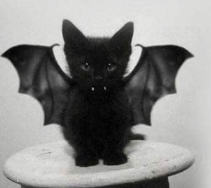 10 Best Halloween Cat Costumes