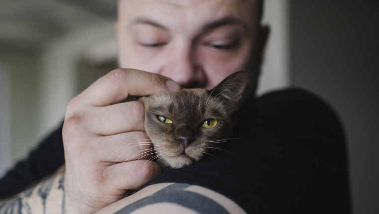 Close-up of tattooed man cuddling Burmese cat