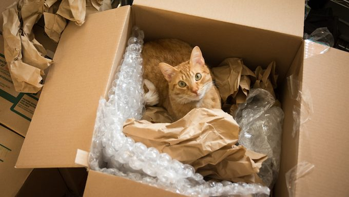 cat in box with packing material