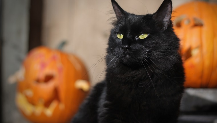 Myths And Legends Why Cats Are Linked With Halloween , CatTime