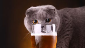 Celebrate Bartender Appreciation Day With These 5 Brewery Cats