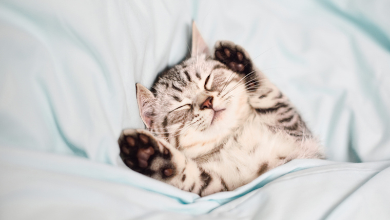 Lovely kitten on sleeping