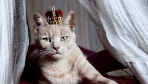 Start Your Own Country Day: 5 Ways Cats Would Run Their Own Country