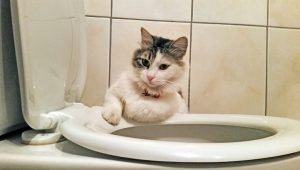 World Toilet Day: 6 Cats Messing With Your Toilet