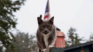 10 Cats Saluting National Pledge Of Allegiance Day!
