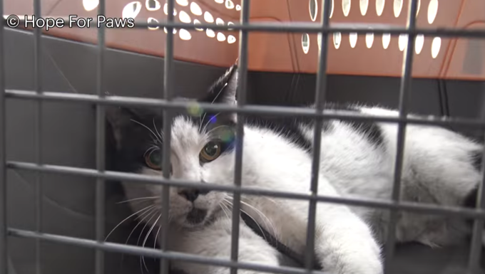 kitty in a cat carrier