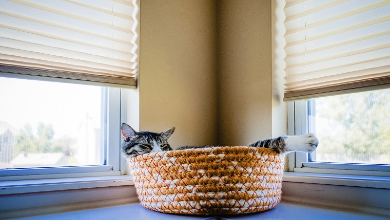 Close-up of cat relaxing in pet bed by windows at home