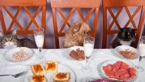 National No One Eats Alone Day: 10 Cats Celebrating With Furry Friends