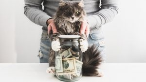 Laugh And Get Rich Day: Check Out How Cats Are Celebrating