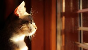 The Case For Indoor Cats: A Step-By-Step Guide