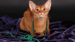 Happy Mardi Gras! 10 Cats Celebrating Fat Tuesday [PICTURES]