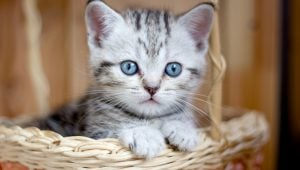30 Cuddly Kittens For National Cuddly Kitten Day