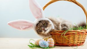 7 Cat-Themed Easter Basket Stuffers For Kitty Lovers