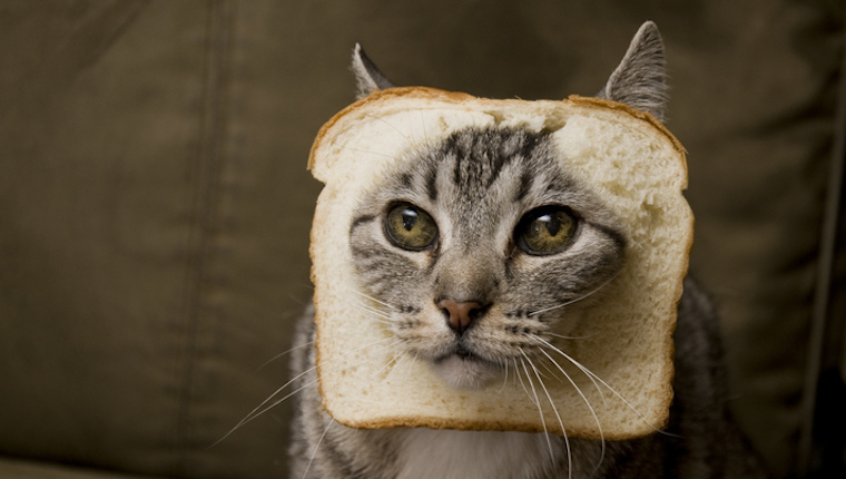 Cat with bread on its head