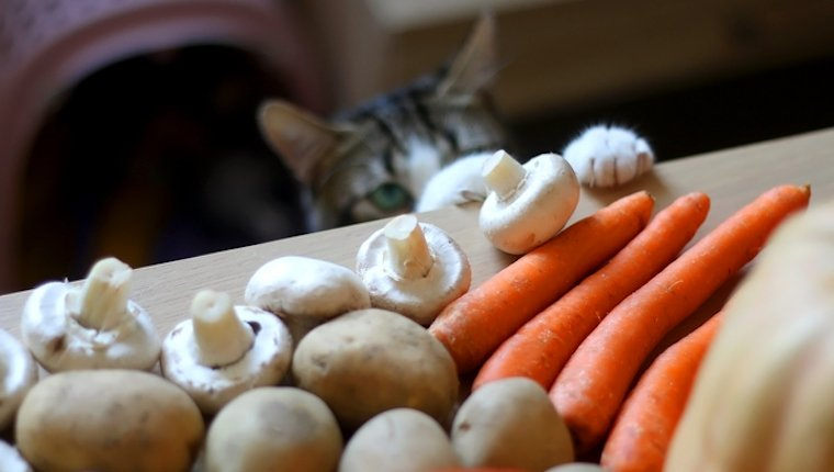 Cat and mushrooms