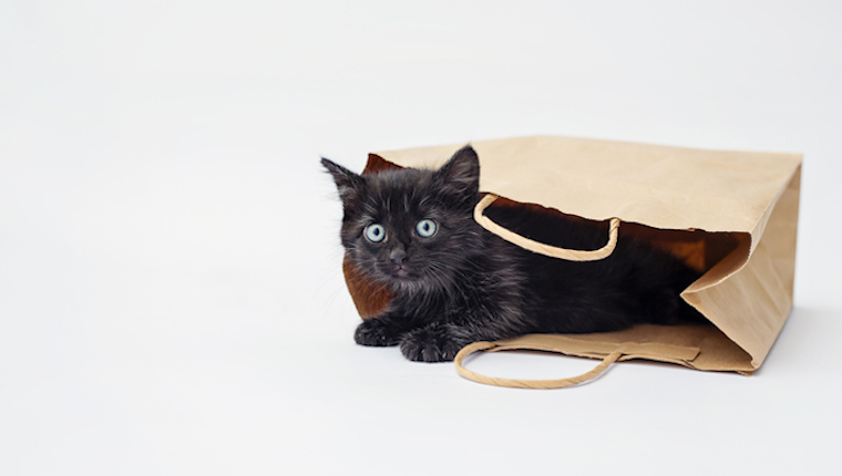 Black kitten in bag