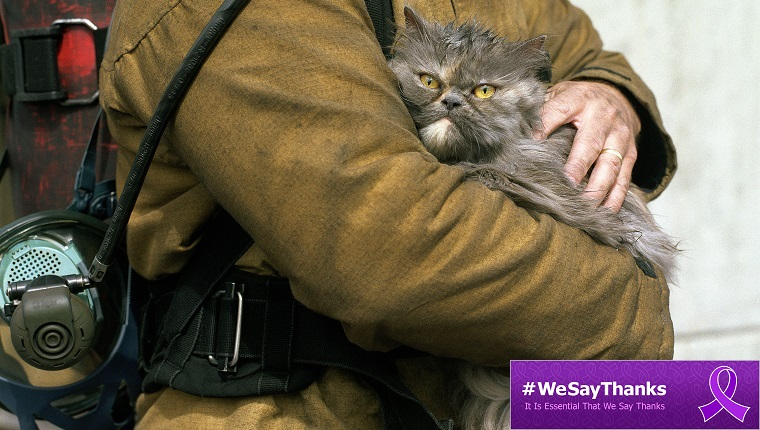 cat with firefighter