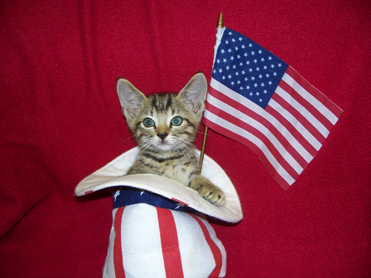 Cats saluting National Pledge of Allegiance Day. Meow!