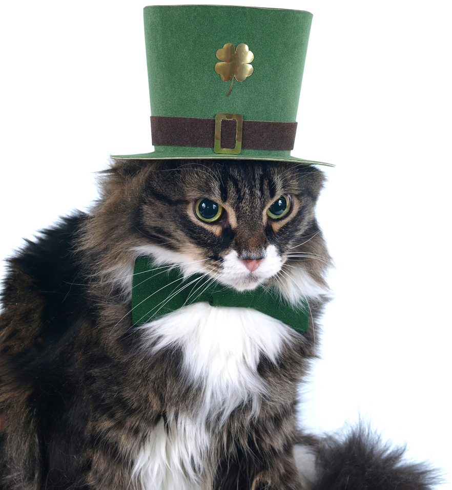 10 cute pictures of cats for st patrick u0027s day cattime