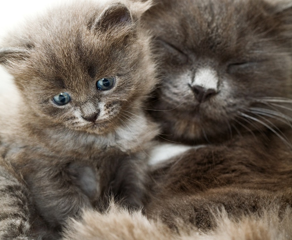 15 Mama Cats And Kittens For Mother s Day CatTime