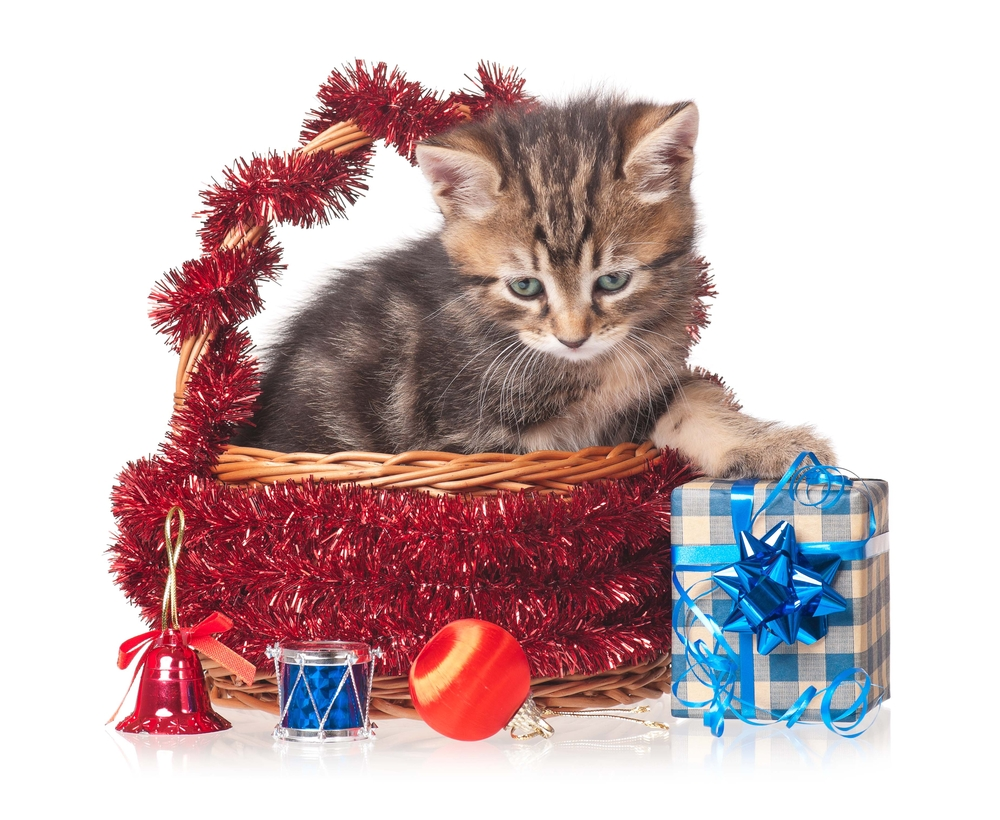 20 Kittens Who Are Ready For Christmas [PICTURES] CatTime
