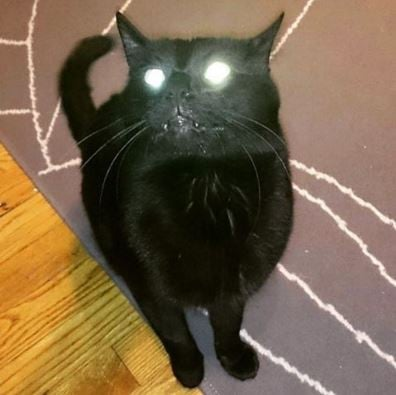 How To Take Pictures Of Cats With Glowing Eyes